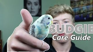 Budgie/Parakeet Care Guide | Basic Info