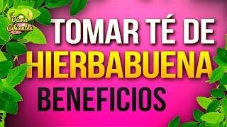 Para Que Sirve El Te De Hierbabuena - Propiedades, Beneficios Y Contraindicaciones De La Hierbabuena
