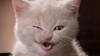 Смешные картинки про кошек и котят Выпуск №80  FUNNY CATS СМЕШНЫЕ КОШКИ
