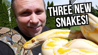 GETTING 3 NEW GIANT SNAKES!! KIND OF?? | BRIAN BARCZYK