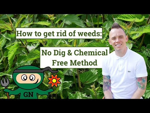 How get rid of garden weeds: no dig & chemical free weeding tips