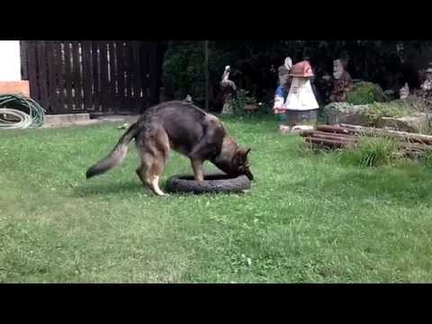 the-best-toy-for-german-shepherd