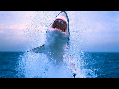 PEOPLE ARE INSANE 2017 ** THE GREAT WHITE SHARK EDITION **