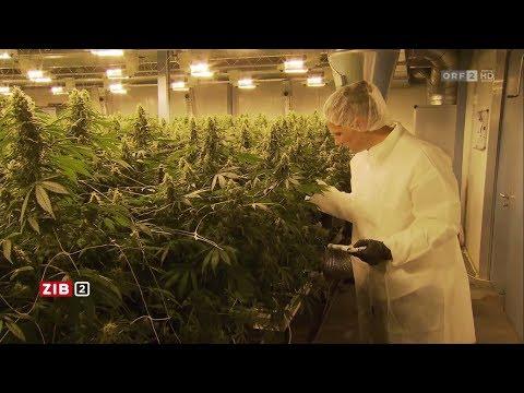 Zeit im Bild - Cannabis aus dem Supermarkt
