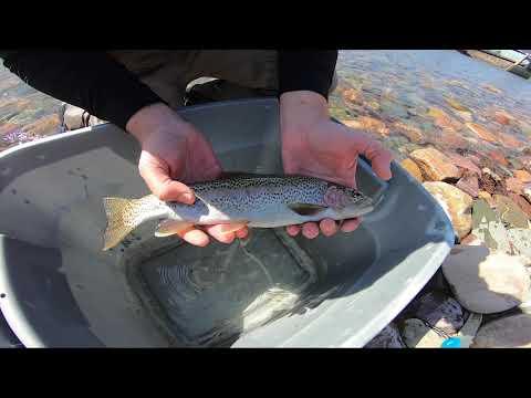 Trout Anatomy W/ Ladd Knotek Of MT Fish, Wildlife & Parks