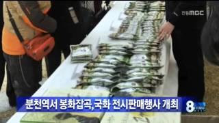 [안동MBC뉴스]봉화 분천역에서 잡곡판매,국화전시회