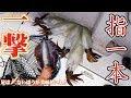 【神業】アオリイカを指一本で神経締め(182話目)
