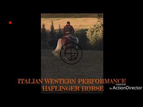 Stone Dorado Italian Western Performance Haflinger