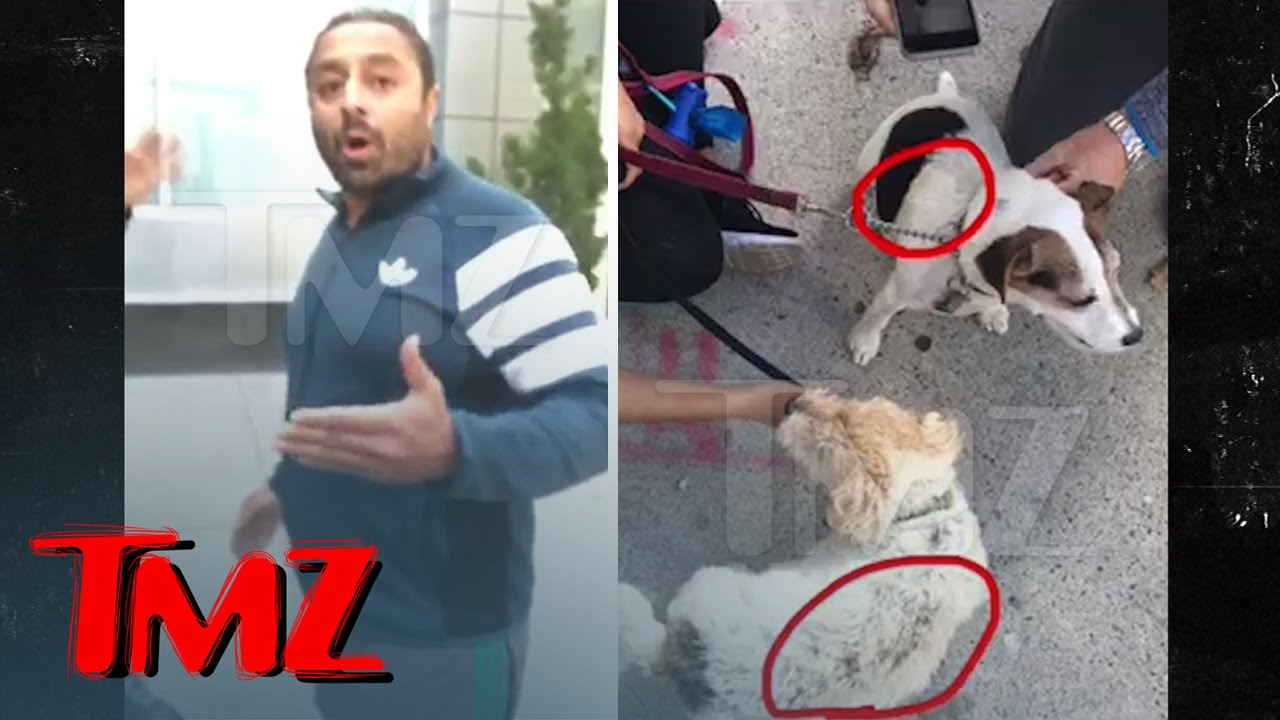 Dream Hotel Owner -- LiLo's Party Pal Accused of Burning Dogs | TMZ