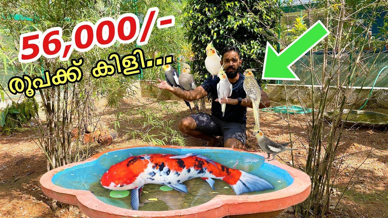 കടയിലെ കിളികളെ മുഴുവൻ വാങ്ങി...   Bought Cages Full of Exoctic Birds Worth 56,000/- Rs