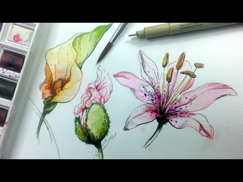 how-to-draw-&-paint-flowers-with-ink-and-watercolor-part-1