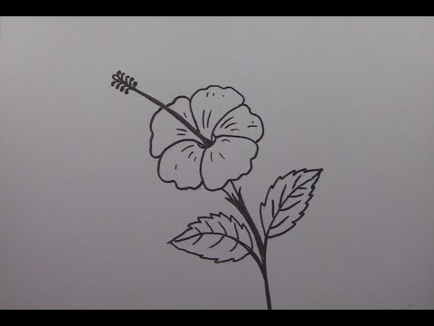 How To Draw A Hibiscus Flower Step By Step