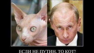 КОШКИ 2020 ПРИКОЛЫ С КОТАМИ Смешные Коты и Кошки 2020 Funny Cats