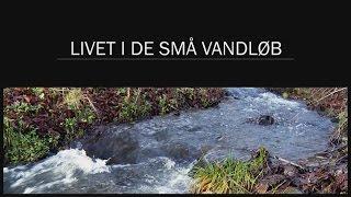 Livet i de små vandløb