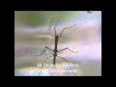 """""""Paraziti""""  karaoke versija"""