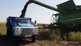 Подсолнечник Syngenta - Sumiko урожайность 37 ц/га