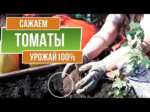 Посадка томатов в открытый грунт ☘ Что посадить рядом на грядке с помидорами