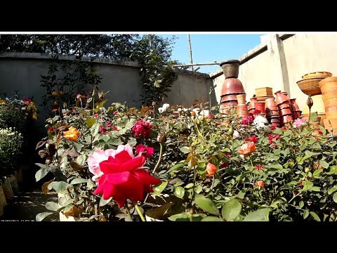 Amazing!!! garden design and potted trees - Bangladesh flower shop