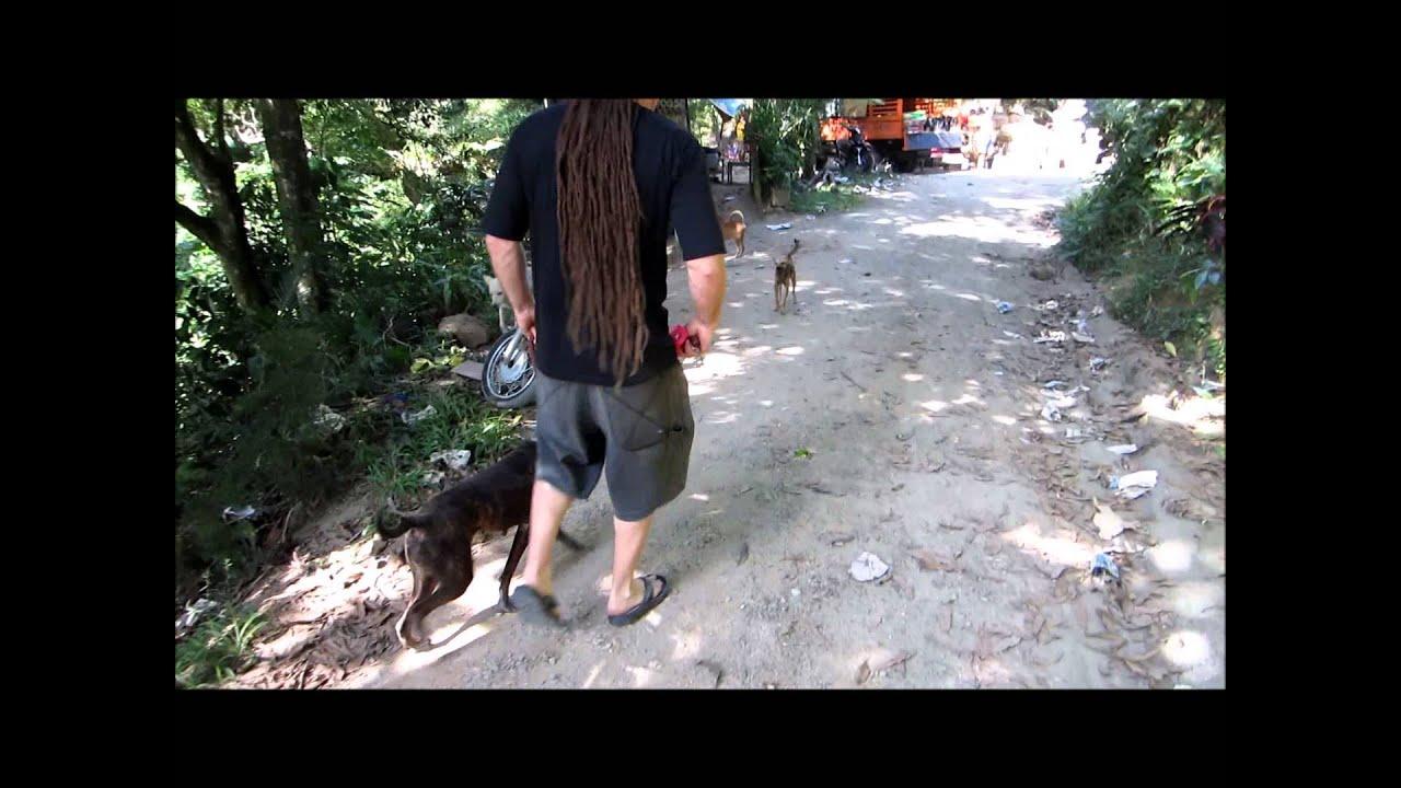 Shute Dog Training