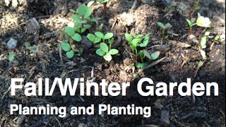 Planning and Planting Fall and Winter Crops in the Alberta Urban Garden