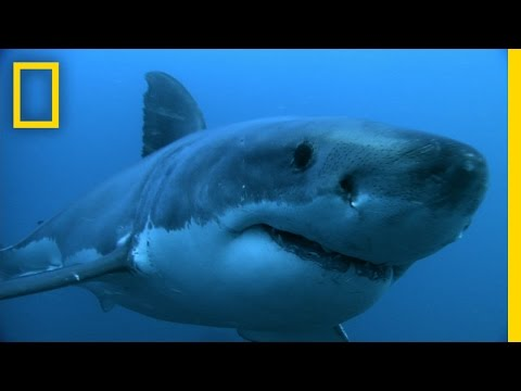 How America's First Shark Panic Spurred a Century of Fear | National Geographic
