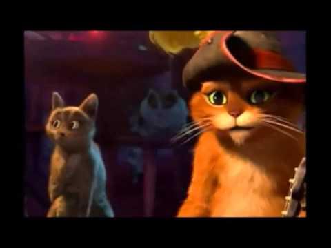 Uuu U >> El Gato Uuuu Sorprendido Xd Youtube