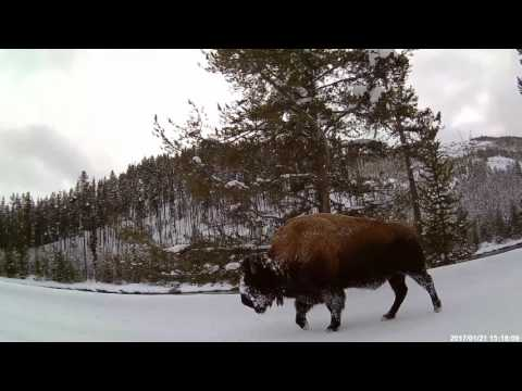 Snowmobile Trip Yellowstone National Park 2017 Jan