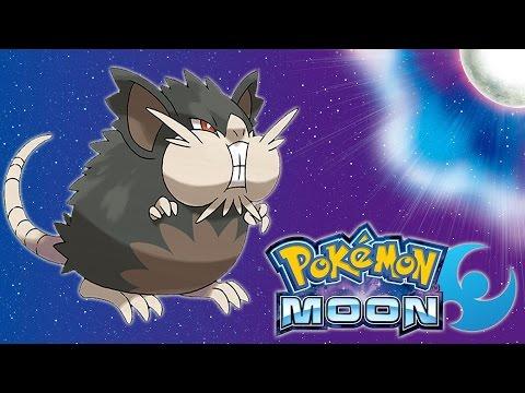Pokemon: Moon - Chubby Raticate - Totom Pokemon