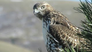#Dubzanator vs #Hawk  This will never happen again!!