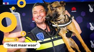 Internetsensatie Politiehond Bumper stopt met sociale media