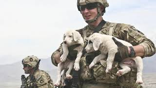 Military Dogs Amazing Facts  Dogs in the Army
