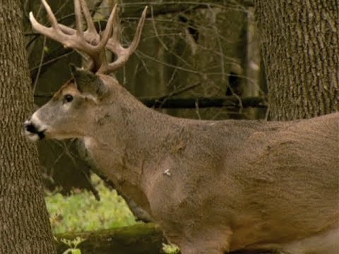 Northwoods Adventure: Grand Rapids Prepares For Governor's Deer Hunting Opener