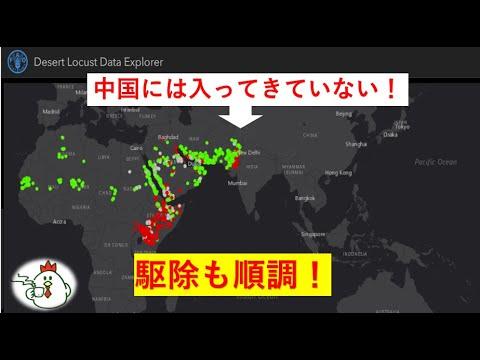 中国 バッタ デマ