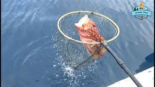 Katil İğneler ile İnanılmaz Balıklar Aldık. Kaçırmayın ;) - 25 Subat 2018