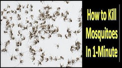 Without ALLOut, GOODnight, and Without Chemicals, How to Kill Mosquitoes in One Minute