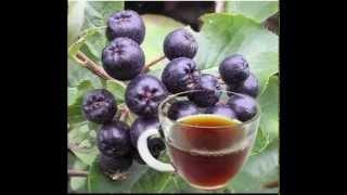 Chokeberries Tea Health Benefits