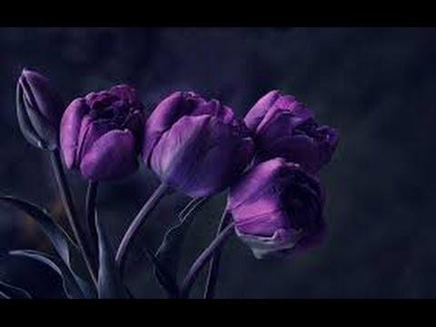 Amapola Its English Version Precious Flower Youtube
