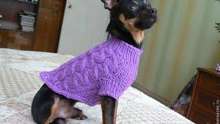 Одежда для маленьких собак! Свитер для собаки! Одежда для таксы!