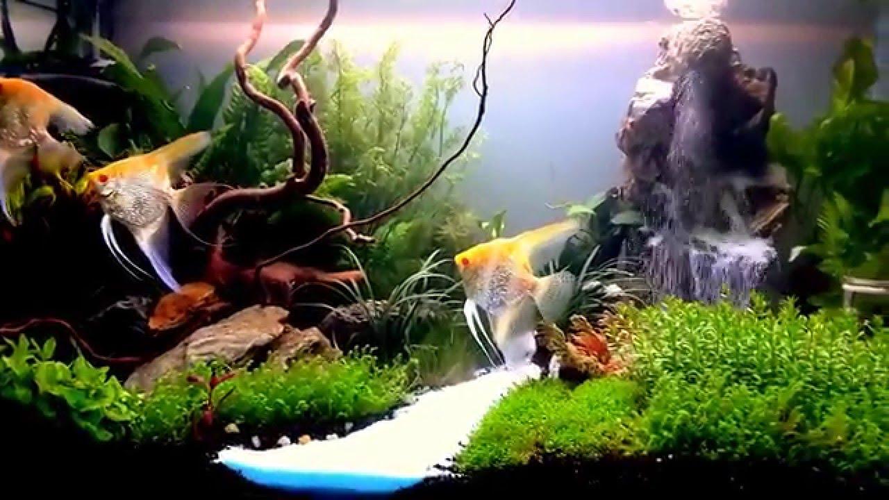 Aquascape waterfall tanjungpinang part 1 - YouTube