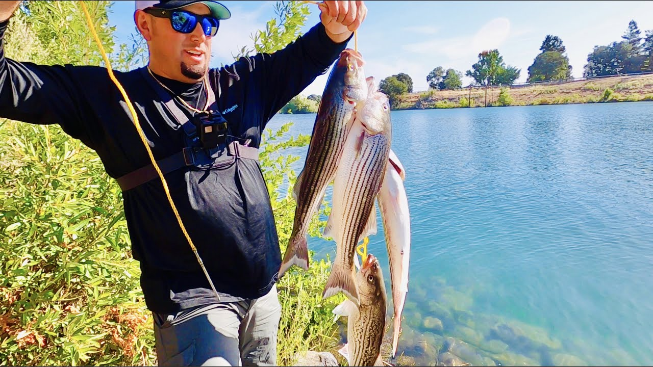 JERKBAIT BANK Fishing On The Sacramento River | CATCH CLEAN COOK | The Best Striper TACOS!!!