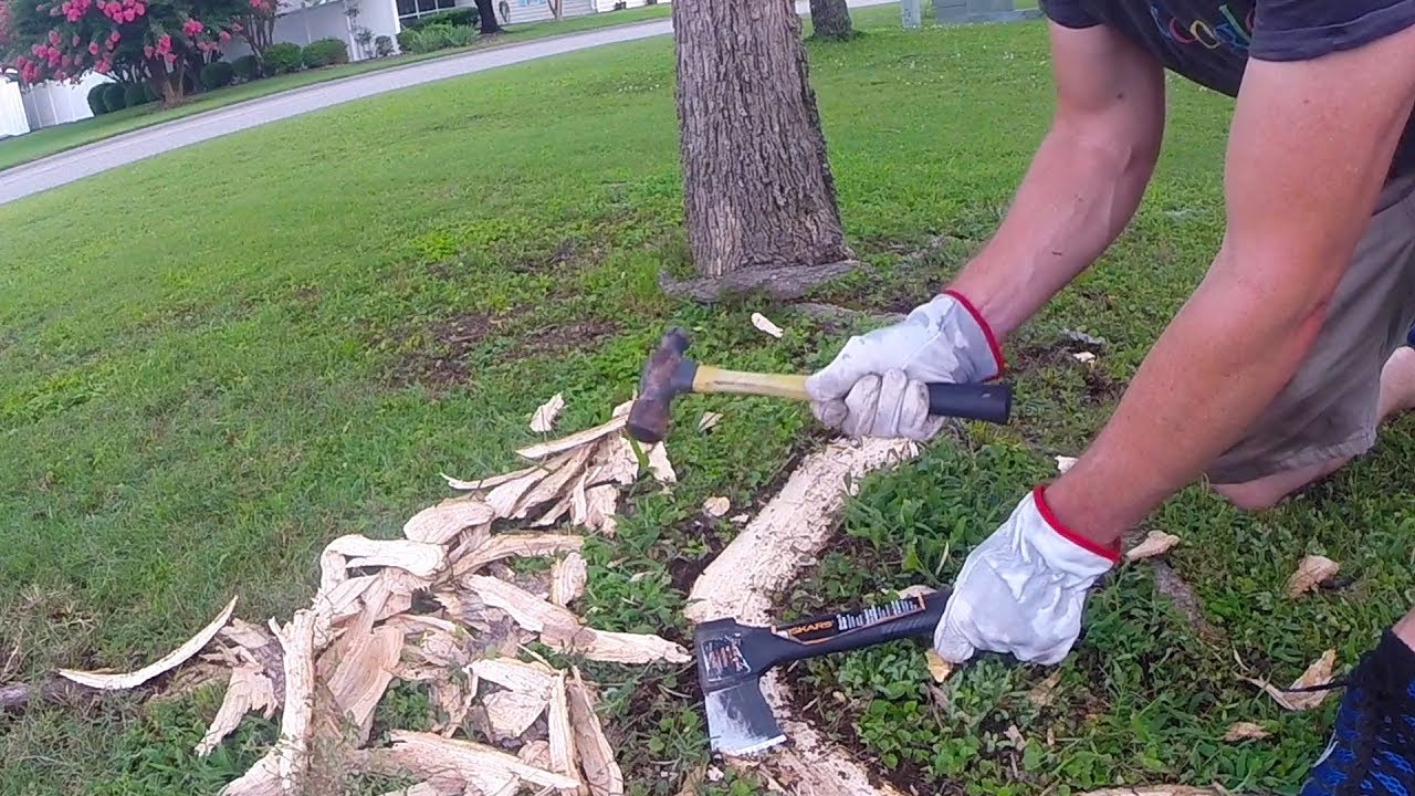 Exposed Tree Roots In Lawn Removed By Hand Youtube