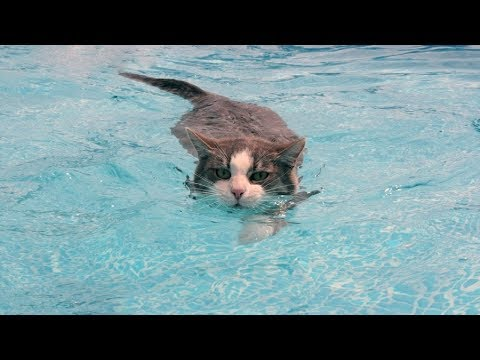 Funny Cats in Water - funny fails videos FFV
