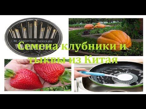 Тыквенные семечки: состав, польза, свойства и лечение