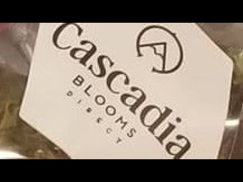 Pa weed review: cascadia blooms unboxing