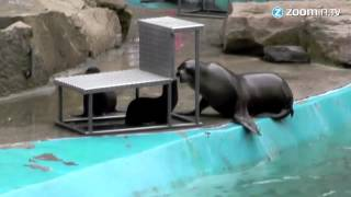 Cute baby sea lions delight visitors at Zoo