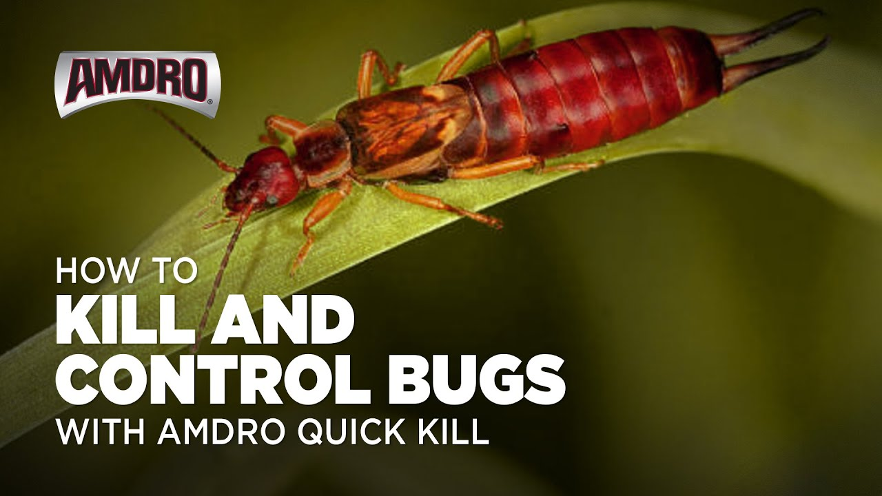 How to Kill Bugs with AMDRO Quick Kill Home Perimeter Insect Killer