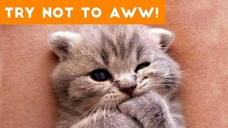 29 cute kitten videos compilation