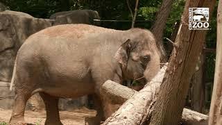 Elephant Trek Ground Breaking - Cincinnati Zoo