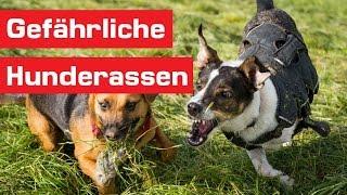 Die 15 gefährlichsten Hunderassen der Welt