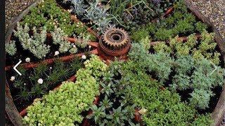 Клумба из пряных трав и салатов, монастырский садик